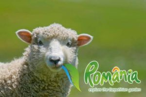 brand romania